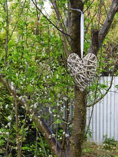 One Mother Hen: Garden inspiration South Australia, Garden Inspiration, Plants, Plant, Planets