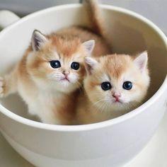 cute-cats-pics-27 Cute cats 31 pics