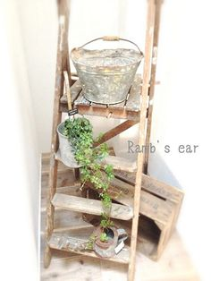 ladder and bracket - gardening