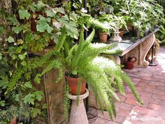 Houseplants Need Special Care in Winter