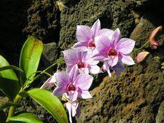 Kauai Artist presents Painting Paradise: Just Another Beautiful Day on Kauai!