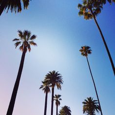 #california #palmtrees #kellywearstler