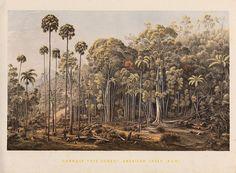 Eugène von Guérard, landscape scenery of Victoria, New South Wales, South Australia & Tasmania, 1867, Universitätsbibliothek Tübingen