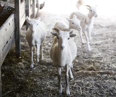 farm-II-017 | Jennifer Silverberg Photography