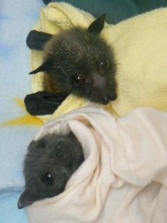 bats in blankets - look how happy the one in pink looks!