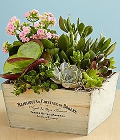 Kalanchoe and Succulent Garden