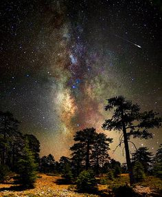 Deep space, deep in the forest by Constantinos Hinis