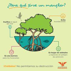 #Manglares #Bosques