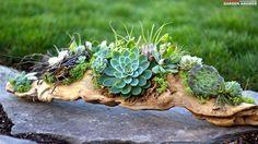 Succulent driftwood arrangement by Laura LeBoutillier