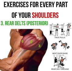 Rear Delts Posterior! Exercises For Every Part Of You Shoulders3