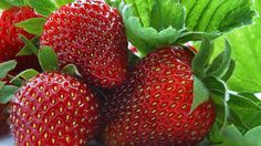 Perfect strawberry wallpaper miscellaneous other wallpapers for