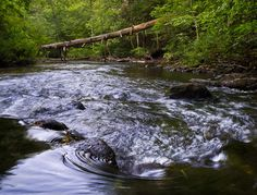 The North Branch - Michigan river (photo by David Wisse)