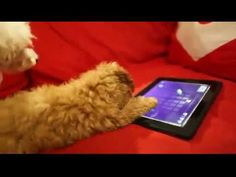 Puppy vs Ipad | The Animal Rescue Site Blog
