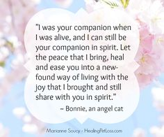 Bonnie the angel cat's message of love – A Sacred Spirit Journey Animal Communication, Always Thinking Of You, Grieving Quotes, Messages For Her, Book Letters, Cat Quotes, Pet Loss, Unconditional Love, In Loving Memory