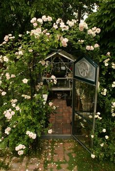 greenhouse, roses, lovely prefection.....
