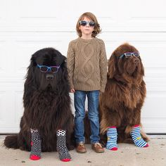 """""""Washington-based photographer Stasha Becker has created an endearing series of Instagram photos featuring her seven-year-old son Julian, their two Newfoundland dogs, and pet horse, Vizon."""""""