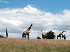 View the animals on one of your game drives Zebras, Giraffes, Rhinoceros, Camels, Primates, Big Cats, Squirrel, Safari, Elephant