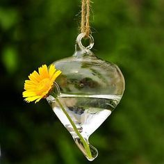 Hanging Q Glass Plant Flower Vase Hydroponic Container Terrarium Home Decor
