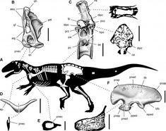 Spinosaurus, Vertebrates, Prehistory, Fossils, Beast, Moose Art, Drawings, Animals, Paleo