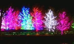 I'm gonna miss seeing these lights in Oklahoma this year.  Chesapeake Christmas Lights