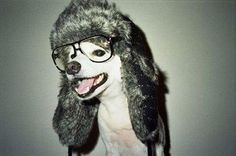 hipster  dog  EastSideMojo Animaux, Comptines, Lunettes, Autre, Coiffure, 8841f85b86f9