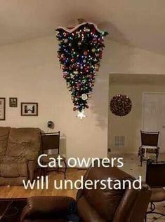 These genius people know how to protect their Christmas trees from dogs and cats. Now learn from these people and celebrate yourself a Merry (Pet-Proof) Christmas. Crazy Cat Lady, Crazy Cats, Photo Chat, Xmas Tree, Christmas Trees, Christmas Cats, Christmas Tree Cat Proof, Christmas Stuff, Christmas 2017