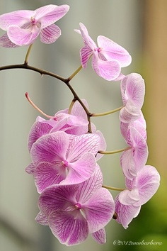 Orchid  these are one of my hobbies.  i have several different types