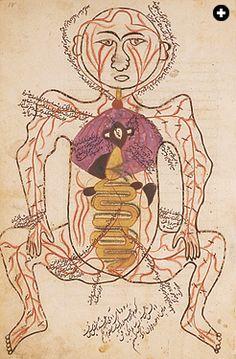 Mansur ibn Ilyas's 14th-century work on anatomy