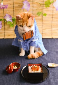 Cool dressing up kitty are ready to eat Fancy Cats, Cute Cats, Kittens In Costumes, Cat Dressed Up, Cat Anatomy, Japanese Cat, Feral Cats, Funny Cat Memes, Cute Animal Pictures