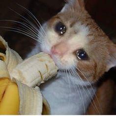 Imágenes turbias.🤠 #detodo # De Todo # amreading # books # wattpad Sad Cat Meme, Cute Cat Memes, Cute Love Memes, Funny Animal Memes, Funny Cats, Funny Animals, Cute Animals, Funny Looking Cats, Cat Crying