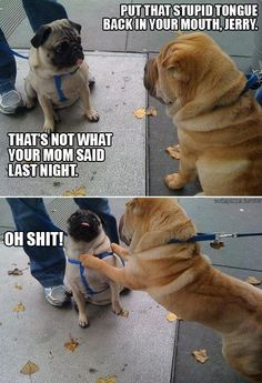 PUG humor!!  @Cortnie Hatchett Conley and @Marla Carpenter, I knew you could both appreciate this one.