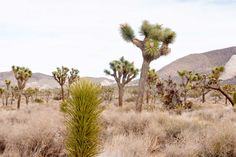 LOS ANGELES: YUCCA VALLEY, OUT OF THE DESERT
