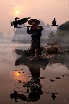 Pescando com corvo-marinho (ou cormorao, galheta, ou bigua) no Rio Li, China.