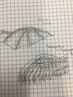 Acotar wings