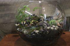Woodland Stream Miniature Garden Terrarium