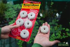InsectCop Reviews: How Effective (and Safe) are Mosquito Dunks?   INSECT COP Mosquito Larvae, Mosquito Control, Insects, Christmas Ornaments, Natural, Christmas Jewelry, Christmas Decorations, Nature