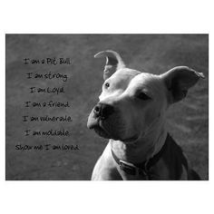 Ban dog fighting & enforce the laws
