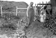 Howard Crowder and daughter in their garden, San Luis Valley Farms, Alamosa, Colorado. Old Pictures, Old Photos, Agriculture, Margaret Bourke White, Ben Shahn, Farm Day, Gordon Parks, Dust Bowl, Vintage Farm