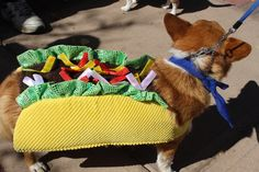 Taco Dog! #dogs #mansbestfriend #tacos #catering #costumes