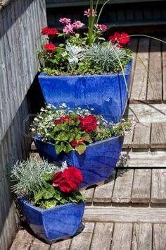 Modré glazované terakotové rostlinné květináče naplněné každoročními květinami používanými jako domácí dekorace.  fotografie