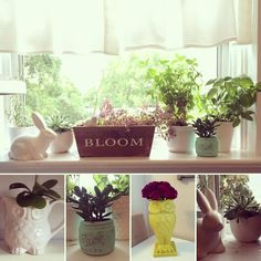 Instagrammer gidgetgoescdn thrifted these decorative vases from Value Village. Great home decor finds! Decorative Vases, Vases Decor, Container Gardening, Thrifting, Planter Pots, Bloom, Antiques, Outdoor Decor, Instagram Posts
