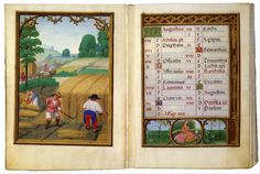 Simon Bening : August: Moving Wheat, Binding Sheaves (The Morgan Library & Museum) 1483-1561 シモン・ベニング