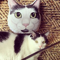 katymar  added a photo of their #etsy purchase  #gift for #catlovers #petlovergift #custompetportrait #catpillow #cute  #etsypets