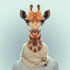Zoo Portraits is a funny photo series by Barcelona-based photographer Yago Partal that pairs animal heads with human bodies. Yago Partal - Des portraits d'animaux habillés The Zoo, Zoo Animals, Funny Animals, Cute Animals, Wild Animals, Moda Animal, Zoo Book, African Giraffe, Photoshop