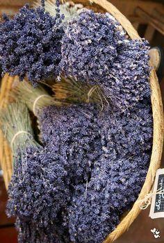 basket of dried lavender flowers Lavender Lavender Cottage, Lavender Garden, French Lavender, Lavender Scent, Lavender Fields, Lavender Color, Lavender Flowers, Lavenders Blue Dilly Dilly, Flower Aesthetic