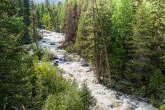 Spring is coming!  Imagine the roar and the smell of the pines.  Bear Creek Runoff 2011  Victor, Montana  ©Mark Mesenko  www.mesenko.com