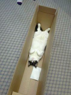 20 katter som visar att de är bättre på DIY än du - Sköna hem