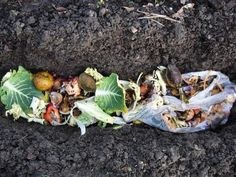 "Trench Composting. simple and fast way!  ***This makes so much sense to me.  Right up there with feeding all your leftovers to your chickens the way my gradma did.  They were her ""disposal"".***"
