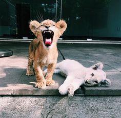 Little big cats! 💜