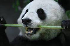 Resultado de imagen para pandas
